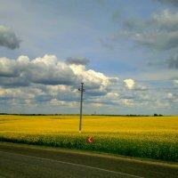 рапсовое поле :: Александр Прокудин