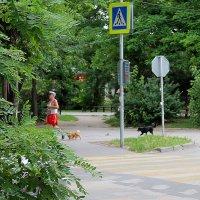 с собачкой,но не дама. ) :: ЕВГЕНИЯ