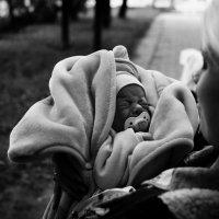 Младенчество :: Роман Шершнев