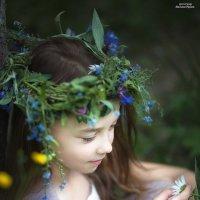 Полевые цветы :: Ирина Малина