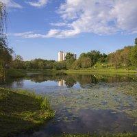 Свибловские пруды :: Дмитрий Вдовин