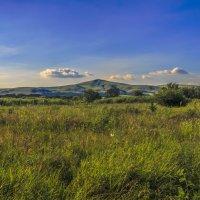 Летние травы :: Бронислав Богачевский