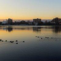 Морозное утро в заливе :: Olga Udo