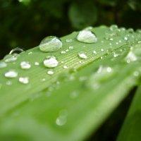 после дождя :: mexicanez Orloff