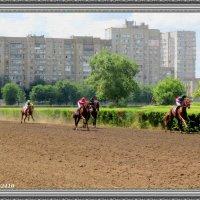 На ростовском ипподроме :: Нина Бутко