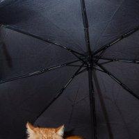 полгода плохая погода... :: Борис Иванов