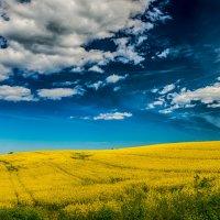 Желтое поле 2. :: Dmitry D