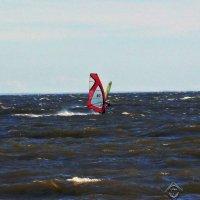 Бабочка в Финском заливе :: U. South с Я.ру