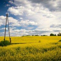 Рапсовое поле. :: Dmitry D