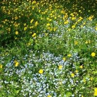 Прошло время цветения,но осталось на наших фотках :: Лидия (naum.lidiya)