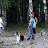 Любители собаководы :: Лидия (naum.lidiya)