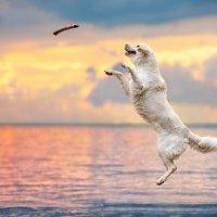 Прыжок в лето :: Олеся Еремеева