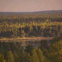 Река Онега в окружении деревьев :: Марина Никулина