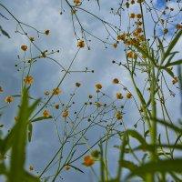в  зеленой траве :: Седа Ковтун