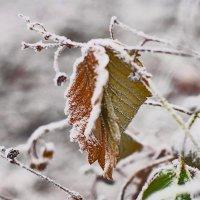 первый  снег :: Георгий Никонов