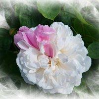 С розовым шарфиком :) :: Nina Yudicheva