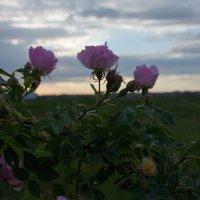 На закате.. :: Ирина Холодная