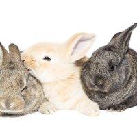 Кролики :: Alex Bush
