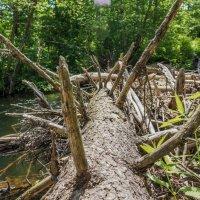 Старое дерево, перекрыло русло реки! :: Ирина Антоновна