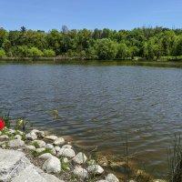 Мой 6-летний внук тоже заболел рыбалкой (в парке Торонто, Канада) :: Юрий Поляков