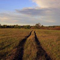 полевая дорога :: оксана