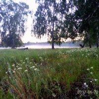 Туман после дождя :: Валентина Богатко