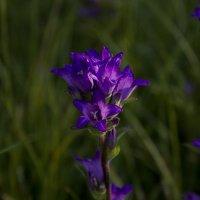 Цветок :: Анастасия Грек