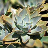Растения, сохраняющие влагу... :: Надя Кушнир