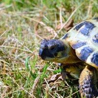 Моя черепаха :: Вадим Басов