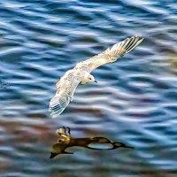 То взлет,то посадка.. :: Виктор Заморков