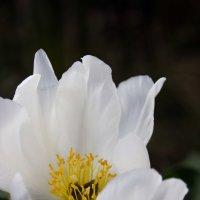 Белое солнце :: Полина Фомина