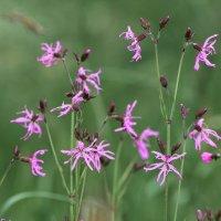 Полевые цветы..... :: Paparazzi