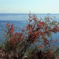 степь и море :: Александр Корчемный