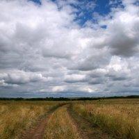 Серая равнина, ветер гонит пыль, стелиться дорога, клониться ковыль ... :: Евгений Юрков