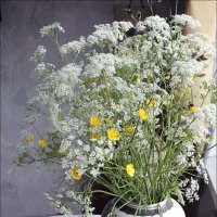 Сныть-трава :: galina bronnikova