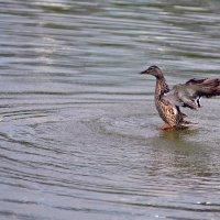 Когда приснилось, что ты орел :: ID@ Cyber.net