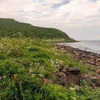 Морское побережье Японского моря :: Нина Борисова
