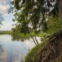 У реки в тишине :: A_Performance ...