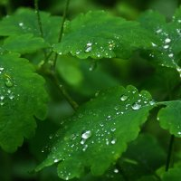 в бисере дождя :: Валентина Папилова