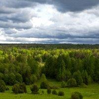 Лес :: Ольга Осовская