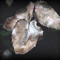 Просто листья :: Алексей Цветков