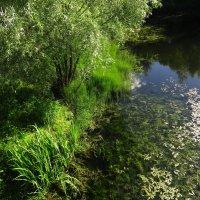 Еще одно наступление лета :: Андрей Лукьянов