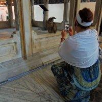 Житель собора св.Софьи в Стамбуле :: Елена Ом