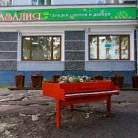 В цветочном магазине :АЗАЛИЯ: :: Ирина Антоновна