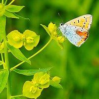 Бабочка :: prokyl