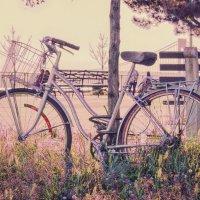 Чуть-чуть про велосипед :: Олег Чемоданов