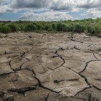 Засуха :: Evgenija Enot