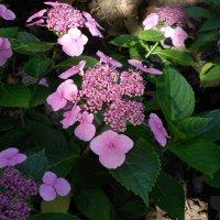 Розовый цветок :: Светлана Беляева
