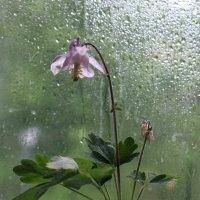 В любую погоду... :: veilins veilins