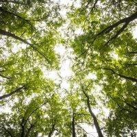 День сквозь деревья :: Татьяна Шторм
